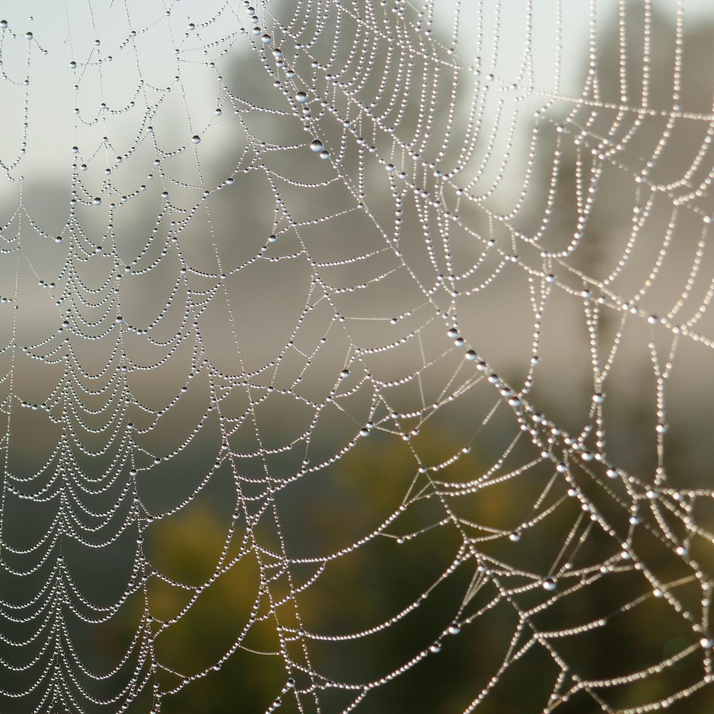 Three Corners – Incy Wincy Spiders